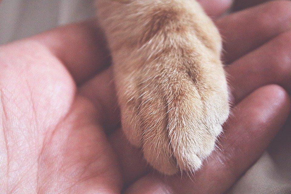 Permesso di lavoro per curare il proprio animale domestico