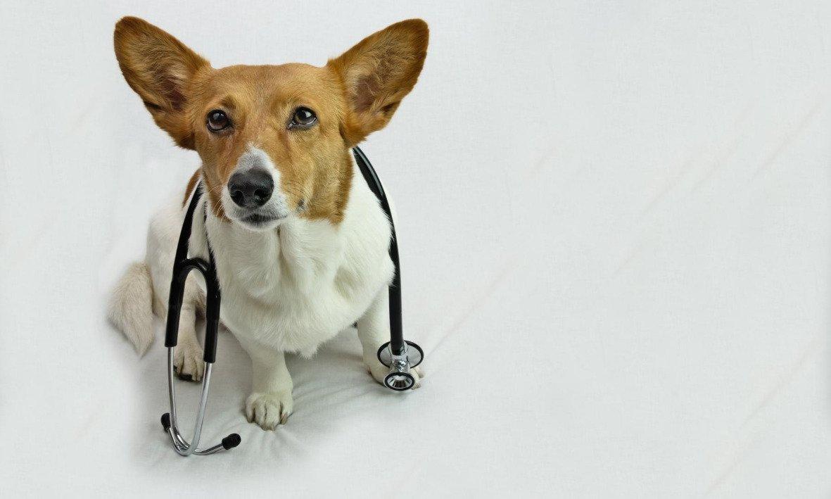Prestito per cure veterinarie
